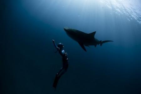Купание с тигровыми акулами (19 фото)