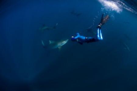 Уилиам Винрэм с тигровой акулой у побережья Южной Африки.