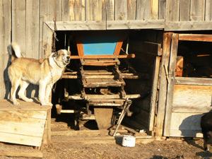 Настоящие сибирские сани — где их еще можно увидеть?