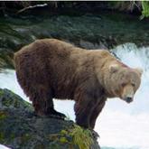 Охота на медведя на камчатке весной
