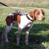 Кормление и содержание охотничьих собак