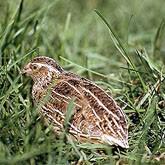 Это фото вы найдете в категории: лучшие фото птиц, клювы птиц фото и...