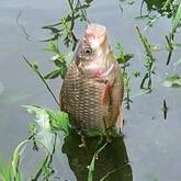 Рыбалка на Усманке: общение с природой или рыбалка с электроудочкой?
