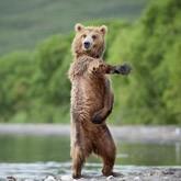 Фестиваль фотографии дикой природы Золотая Черепаха 2012