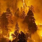 Лесные пожары продолжаются на Дальнем Востоке.