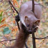 Новости об охоте и животных. Ноябрь 2011