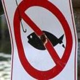 Запрет рыбалки на время нереста в регионах
