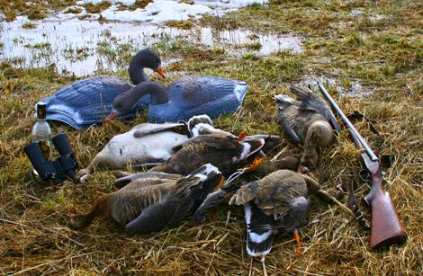 Охота на гуся одна из самых увлекательных охот.  Успех охоты на гусей в зависит от разведки...