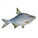 Рыбалка на густеру